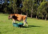 Run water lines to paddocks with drinking troughs with floats